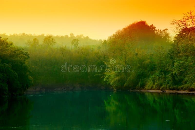 Puesta del sol en selva imagen de archivo libre de regalías