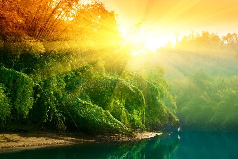 Puesta del sol en selva fotos de archivo
