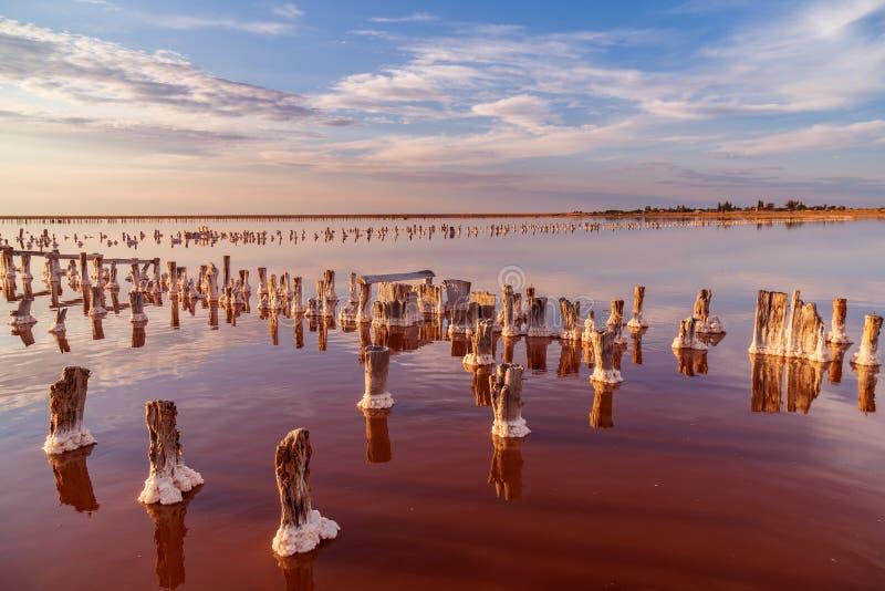 Puesta del sol en un lago de sal rosado, una mina anterior para la extracción de la sal rosada fila de las clavijas de madera dem fotografía de archivo libre de regalías