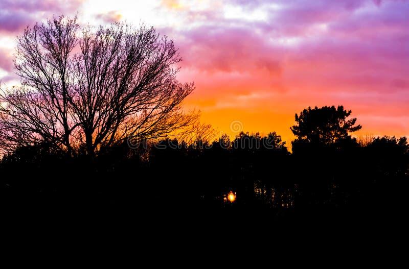 Puesta del sol en un paisaje del bosque que crea la silueta oscura del paisaje, ocaso que pinta el cielo y las nubes en colores h imagen de archivo libre de regalías