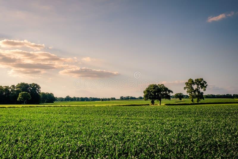 Puesta del sol en un paisaje holandés típico Twente, Overijssel de la granja del verano imagen de archivo libre de regalías