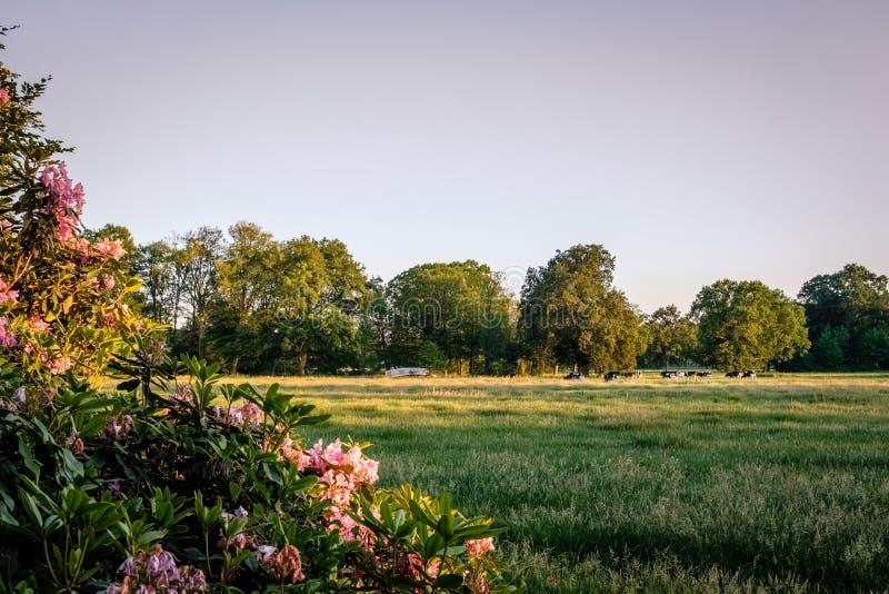 Puesta del sol en un paisaje holandés típico Twente, Overijssel de la granja del verano foto de archivo