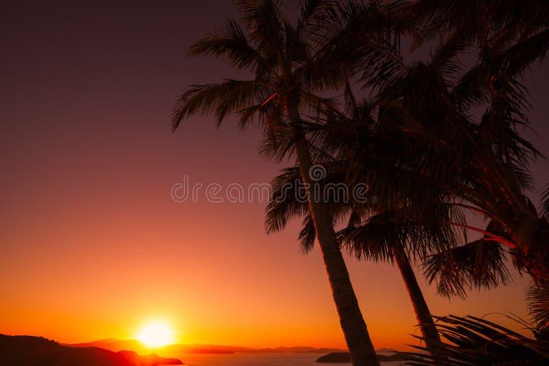 Puesta del sol en una colina del árbol, Hamilton Island australia imagen de archivo