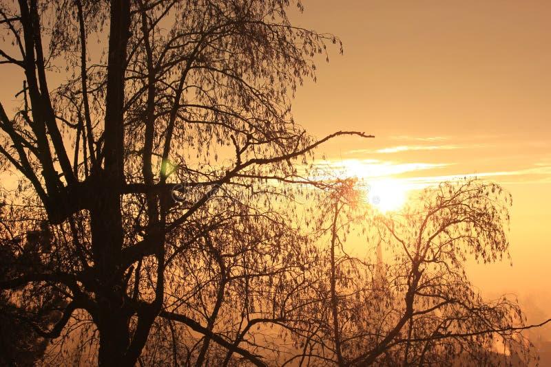 Puesta del sol en una tarde preciosa del invierno imágenes de archivo libres de regalías