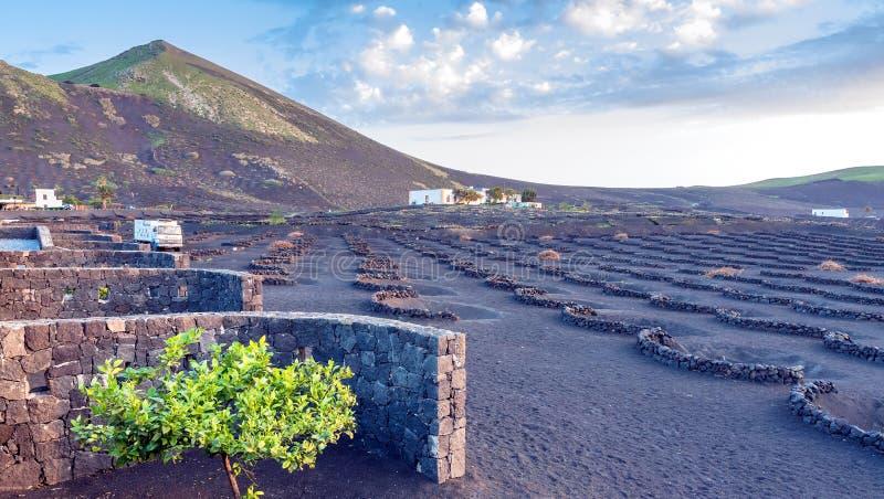 Puesta del sol en viñedos en el La Geria, Lanzarote, islas Canarias fotografía de archivo libre de regalías