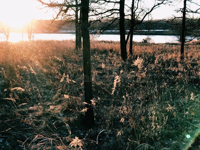 Puesta del sol entre árboles fotografía de archivo