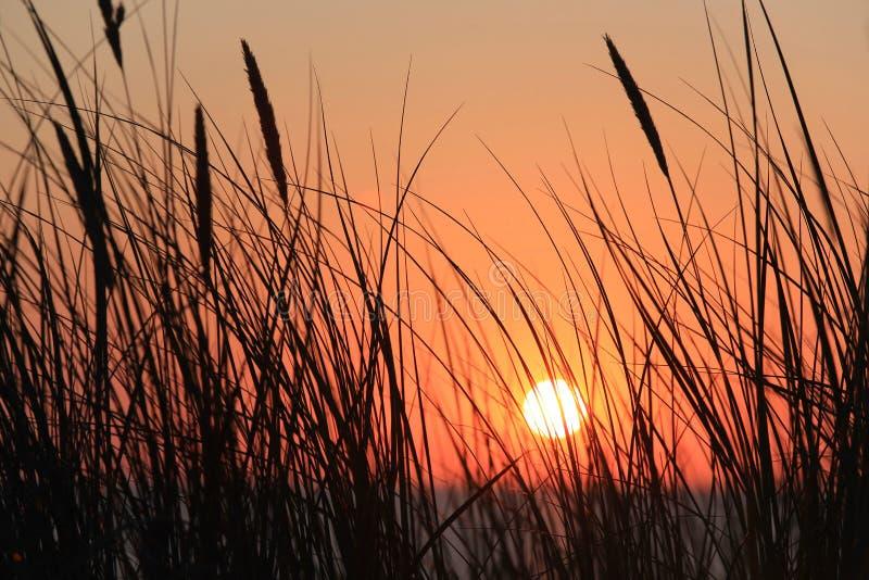 puesta del sol entre las cañas fotos de archivo