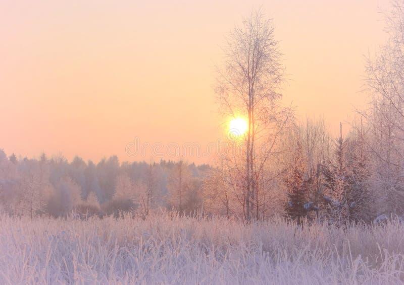 Puesta del sol fría, brumosa del invierno con la gran luz Plantas Nevado imagen de archivo libre de regalías