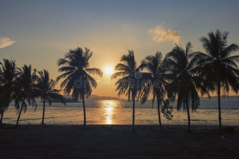 Puesta del sol, granja de palmeras dulce del coco de la silueta hermosa contra fondo en la isla tropical Tailandia coco fresco en imagenes de archivo