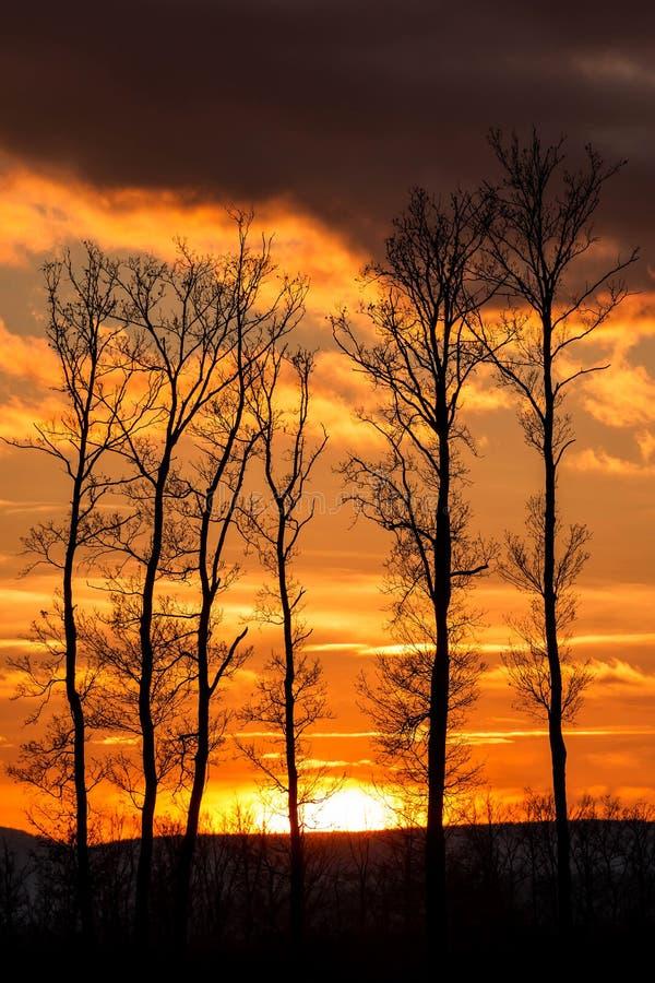 Download Puesta del sol hermosa foto de archivo. Imagen de misty - 41901078