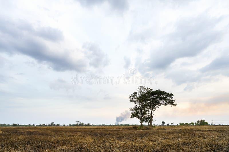 Puesta del sol hermosa con la nube oscura en el árbol de los campos de hierba seca en el campo en la tarde imagen de archivo libre de regalías