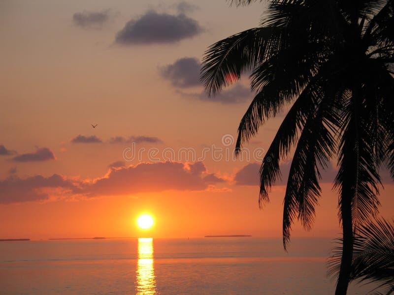 Puesta del sol hermosa con las palmas imagen de archivo libre de regalías