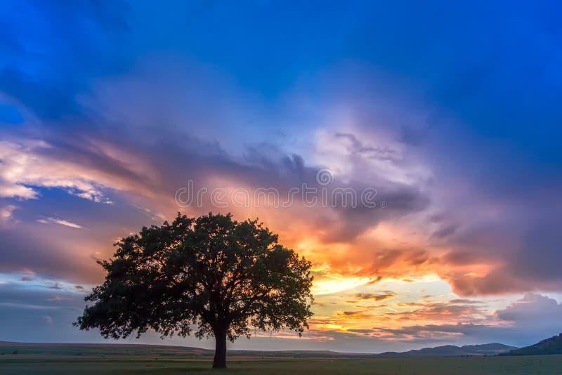 Puesta del sol hermosa con un árbol solo en un campo, el sol poniente que brilla a través de ramas y nubes fotos de archivo