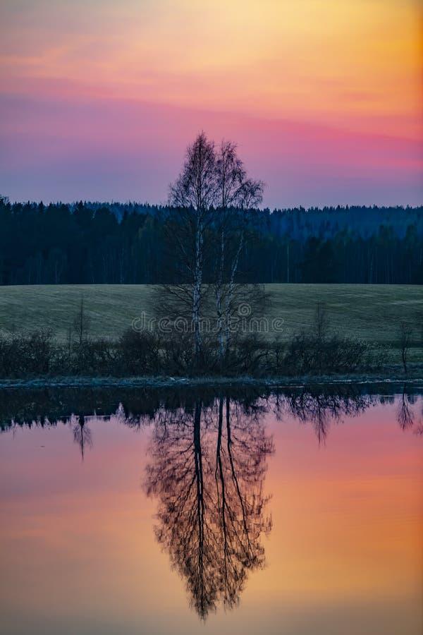 Puesta del sol hermosa de la primavera en Finlandia La imagen muestra un árbol deshojado que se refleje del agua fotografía de archivo