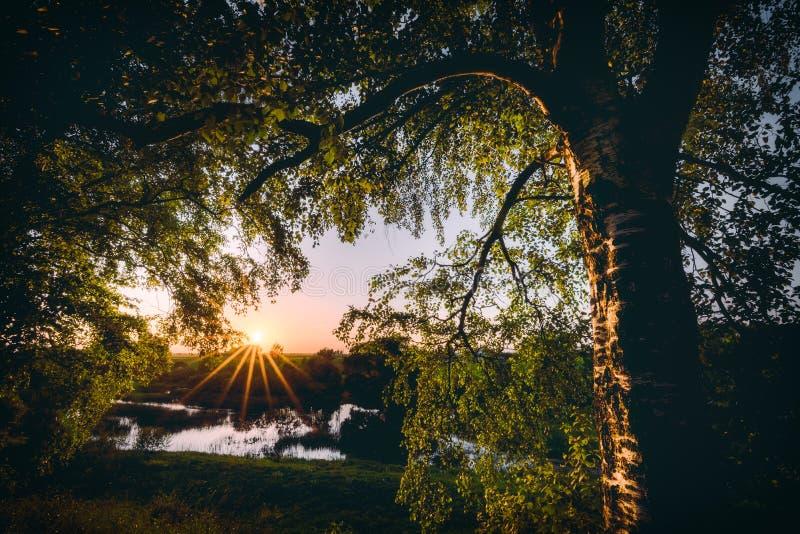 Puesta del sol hermosa debajo del árbol de abedul cerca del río fotos de archivo libres de regalías