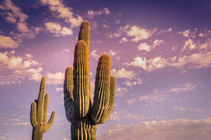 Puesta del sol hermosa del desierto de Arizona imagen de archivo