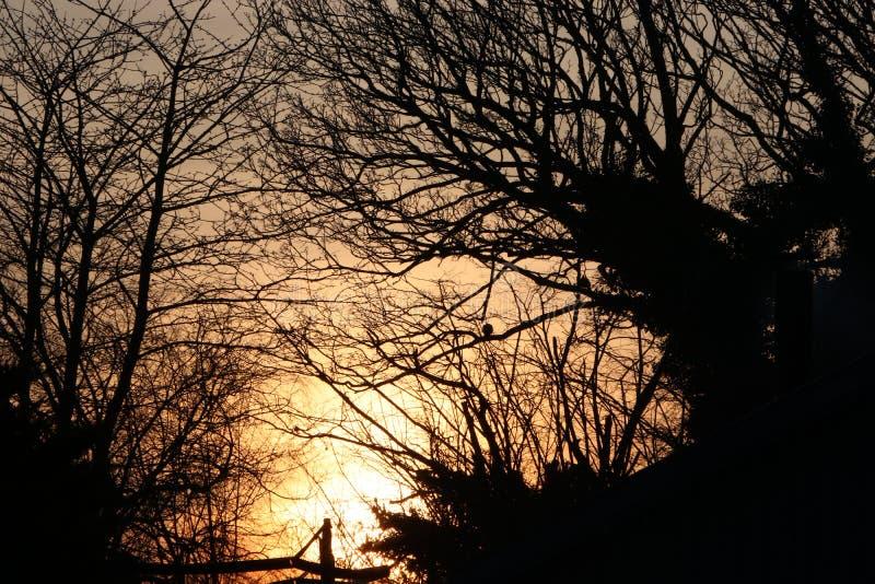 Puesta del sol hermosa detrás de árboles Luz anaranjada foto de archivo libre de regalías