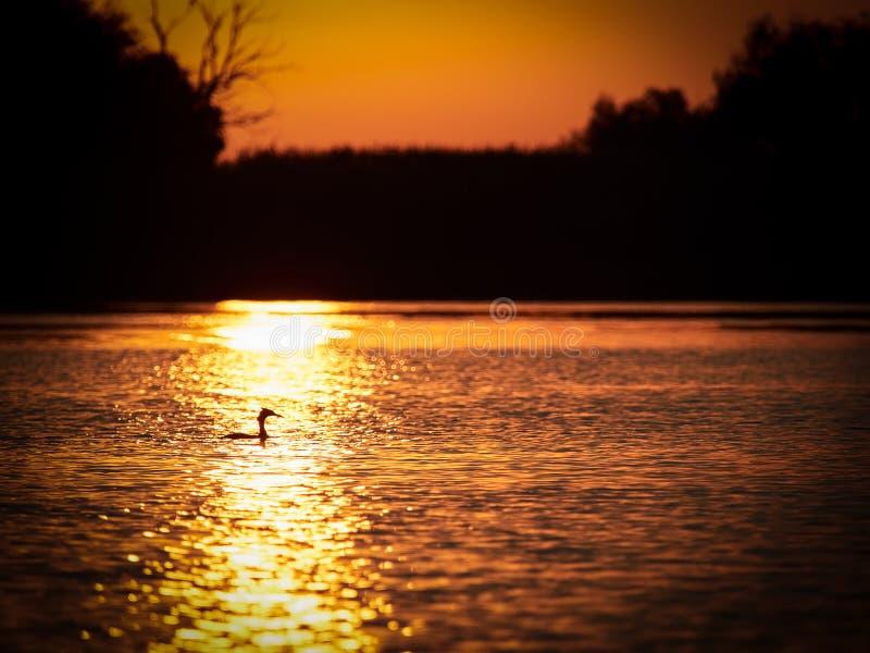 Puesta del sol hermosa en el delta de Danubio, Rumania foto de archivo libre de regalías