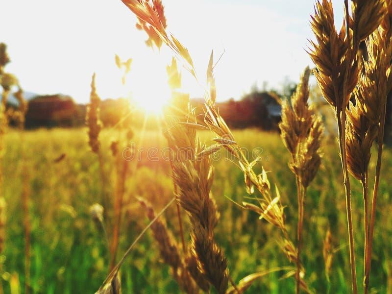 Puesta del sol hermosa en el pueblo imagen de archivo libre de regalías