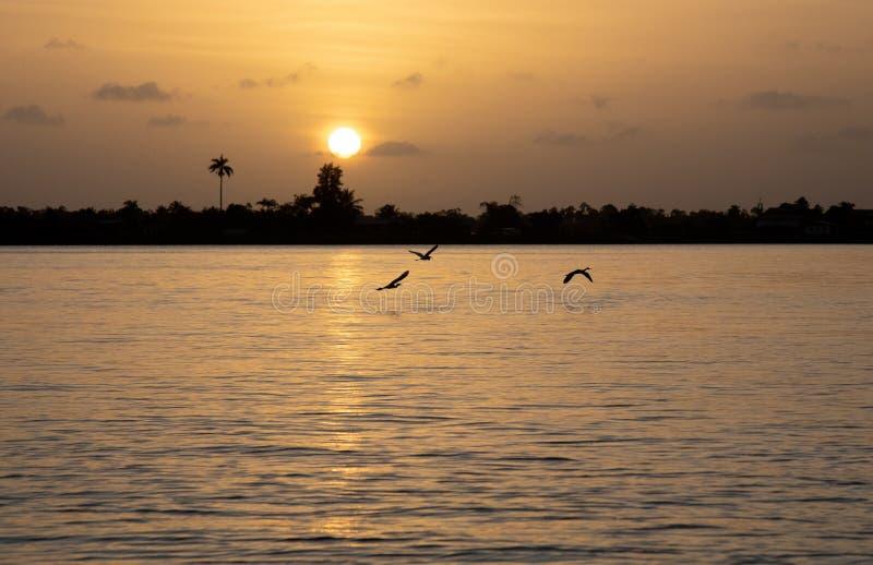 Puesta del sol hermosa en el río Suriname con las garzas del vuelo imagenes de archivo
