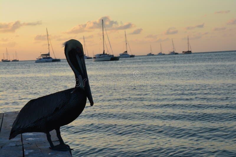 Puesta del sol hermosa en la isla del calafate de Caye en Belice foto de archivo libre de regalías