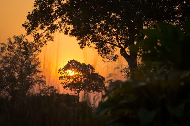 Puesta del sol hermosa en la selva fotos de archivo