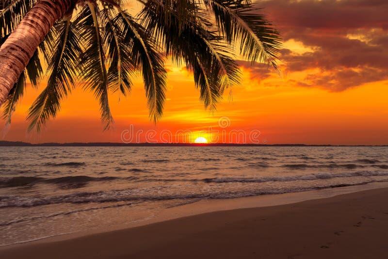 Puesta del sol hermosa sobre el mar con el árbol de coco en el verano fotos de archivo