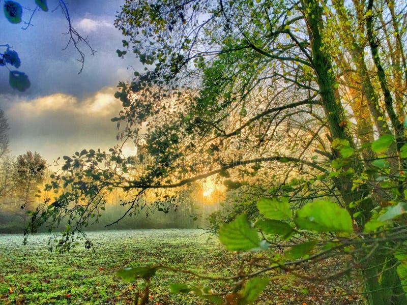Puesta del sol hermosa sobre un bosque fotografía de archivo