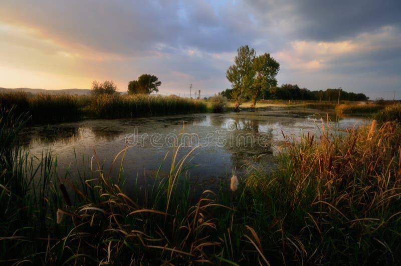Puesta del sol hermosa sobre un pequeño lago, en un área del pantano fotografía de archivo libre de regalías