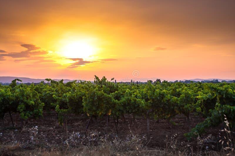 Puesta del sol hermosa sobre un viñedo fotografía de archivo