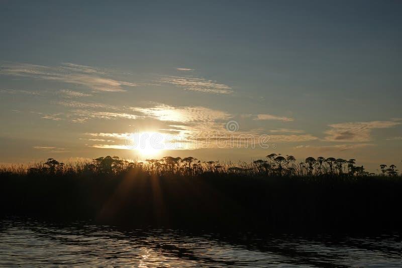 Puesta del sol hogweed gigante de la tarde del verano en las aguas cerca de Grou en Frisia fotografía de archivo