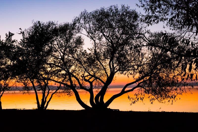 Puesta del sol increíble, brillante sobre el agua contra la perspectiva de la cual la silueta de un árbol grande fotos de archivo