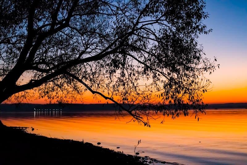 Puesta del sol increíble, brillante sobre el agua contra la perspectiva de la cual la silueta de un árbol grande foto de archivo libre de regalías