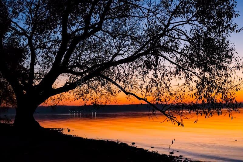 Puesta del sol increíble, brillante sobre el agua contra la perspectiva de la cual la silueta de un árbol grande fotografía de archivo libre de regalías