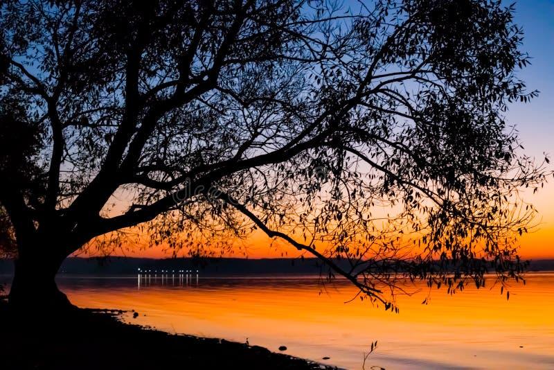 Puesta del sol increíble, brillante sobre el agua contra la perspectiva de la cual la silueta de un árbol grande foto de archivo