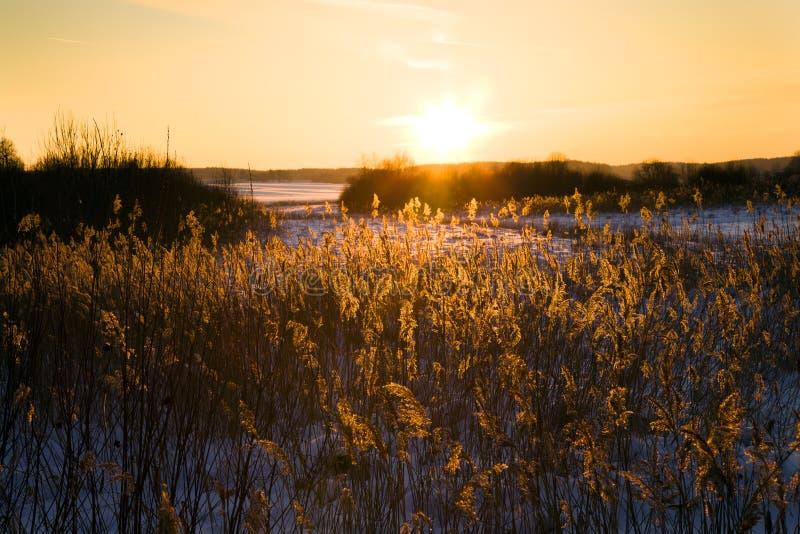 Puesta del sol (invierno) fotografía de archivo libre de regalías