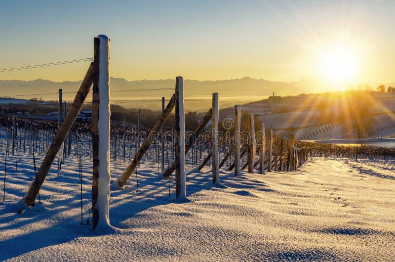 Puesta del sol del invierno sobre los viñedos de Barolo Langhe, Piamonte, AIE foto de archivo