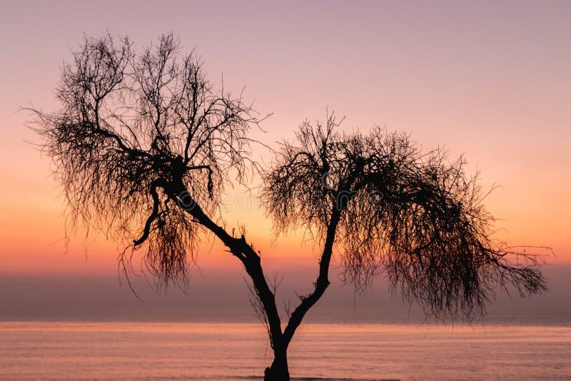Puesta del sol multicolora roja anaranjada púrpura con el árbol silueteado en f fotografía de archivo libre de regalías