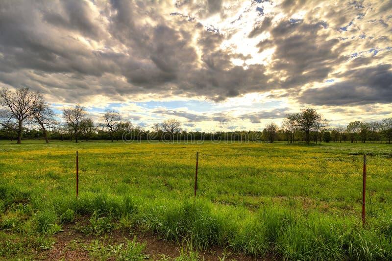 Puesta del sol nublada sobre campo florecido amarillo foto de archivo