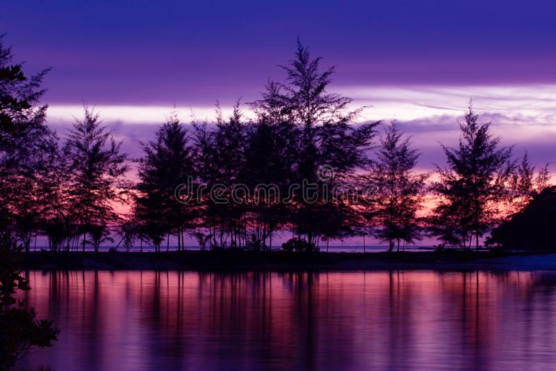 Puesta del sol o salida del sol hermosa con la reflexión tropical de la playa del mar de los árboles de pino de la silueta en el  foto de archivo
