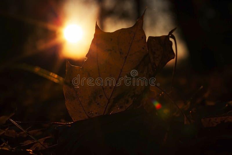 Puesta del sol, otoño imágenes de archivo libres de regalías