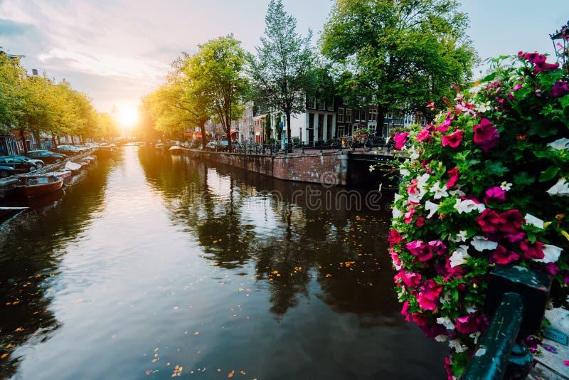 Puesta del sol del otoño en las calles y los canales de Amsterdam Flores de Befutiful en frente imágenes de archivo libres de regalías