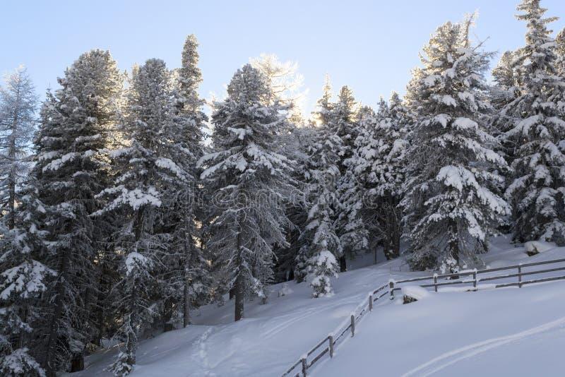 Puesta del sol para el bosque nevado imagenes de archivo