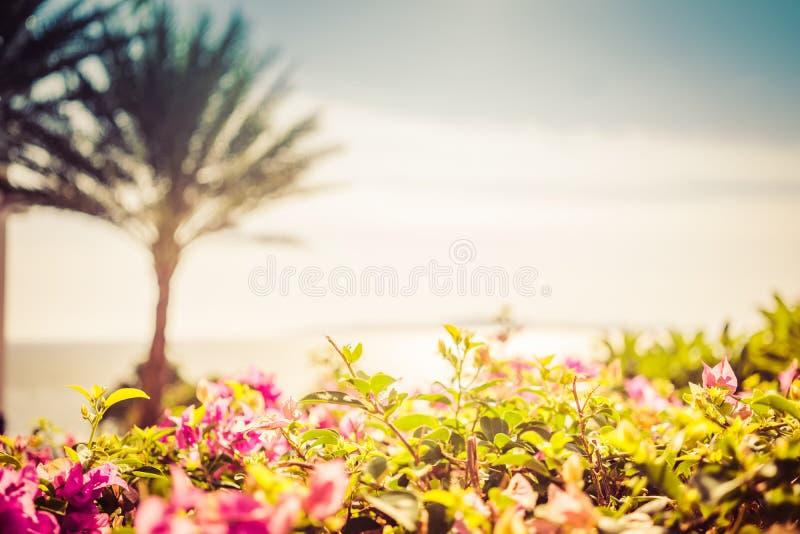 Puesta del sol pintoresca cerca del mar con la palmera del coco, el horizonte, el sol anaranjado y las nubes imágenes de archivo libres de regalías