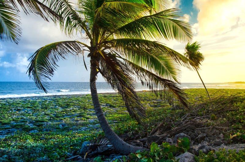Puesta del sol que pasa por alto las palmeras en la costa de piedra imagen de archivo libre de regalías