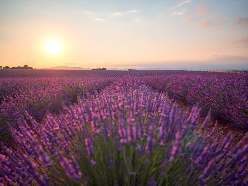 Puesta del sol que sorprende sobre el campo violeta de la lavanda en Provence fotografía de archivo libre de regalías