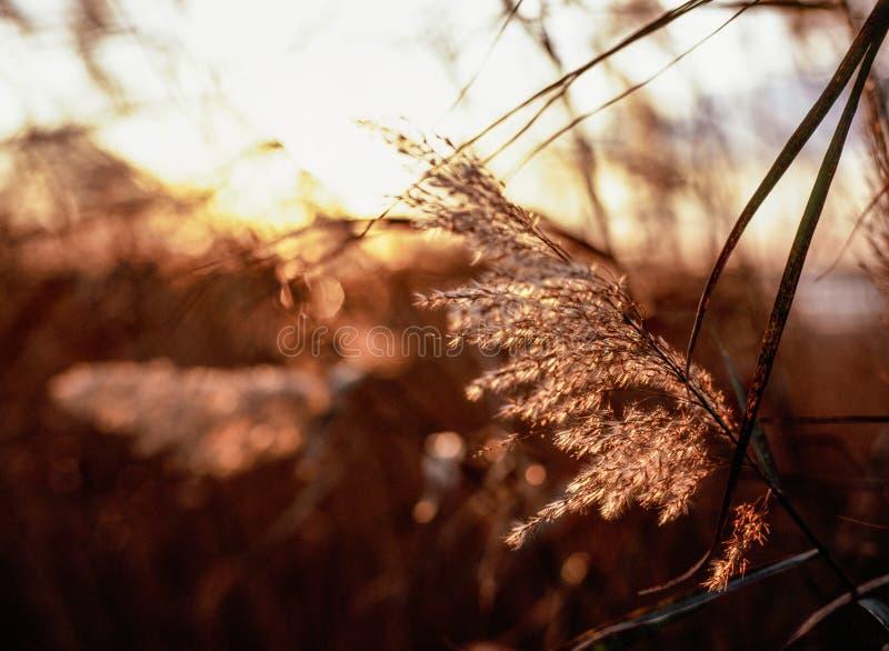 Puesta del sol remilgada del gancho foto de archivo libre de regalías