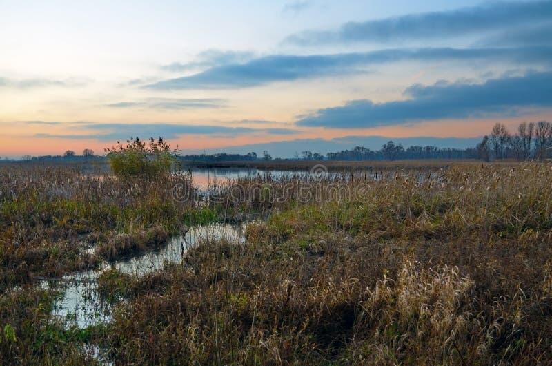 Puesta del sol roja en el río en los matorrales de lámina imagen de archivo libre de regalías