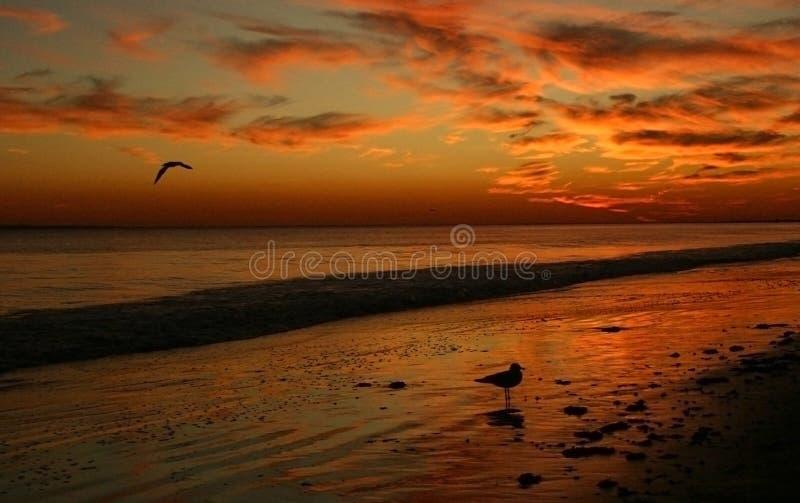 Puesta del sol roja sobre Brighton Beach fotografía de archivo