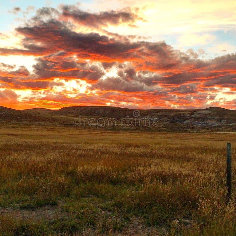 Puesta del sol roja sobre campos de oro fotos de archivo libres de regalías